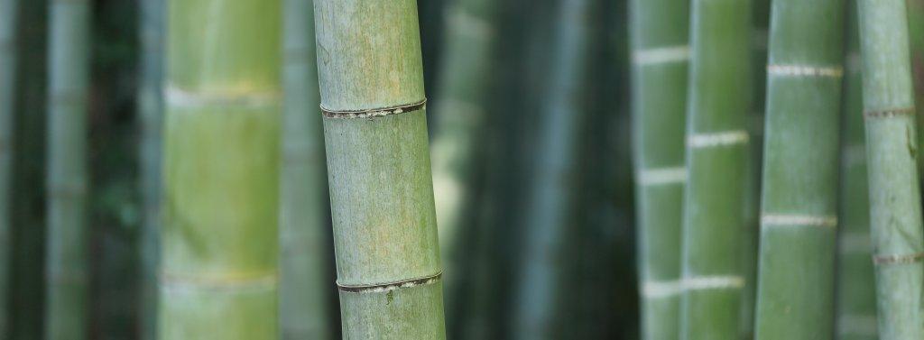 BAMBUS V UCHU, mobake, bambus, bamboo, bambusove vatove tycinky