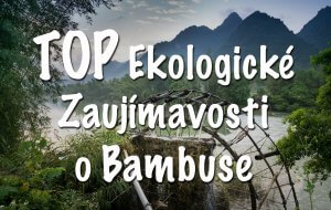 bambus ekologia, TOP Ekologické Zaujímavosti o Bambuse, mobake